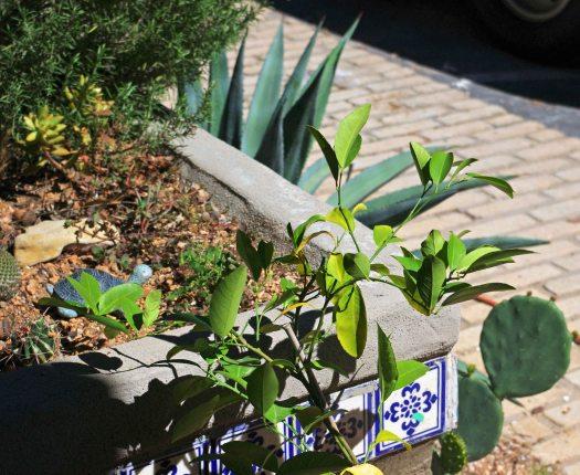 ATX home garden