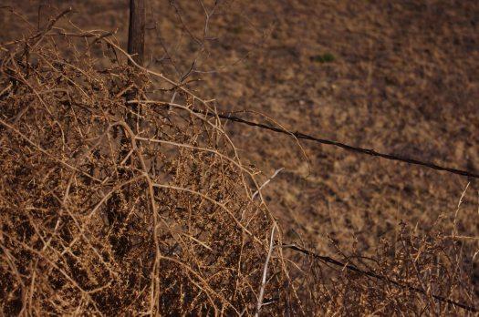 Barbedwire:tumbleweed