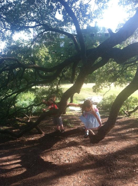 A+F_fave tree wonderland