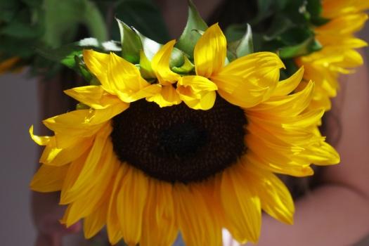 Alina_sunflower
